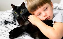 keeping pets at home